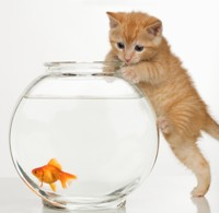 Cat and fish 200