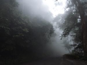 79418935Carretera_nublada,_Parque_NacIonal_HenrI_Pittier